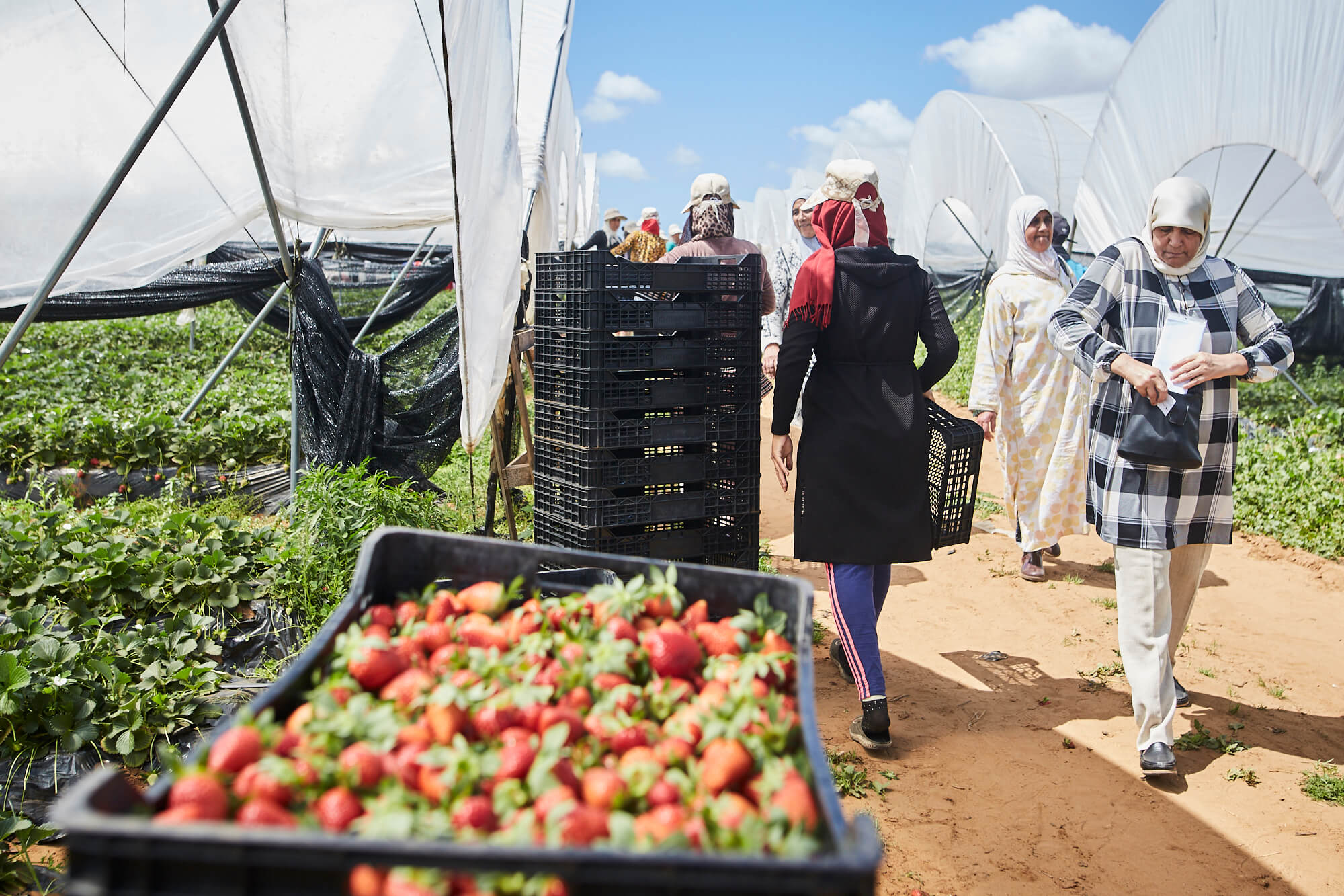 Bringing young people into the agricultural sector